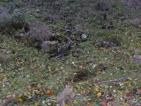 02-nalada-v-lese-natalka-bario_289x218.jpg