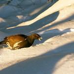 29-ptak-neznamy