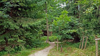 Malé Arboretum Černá Studnice