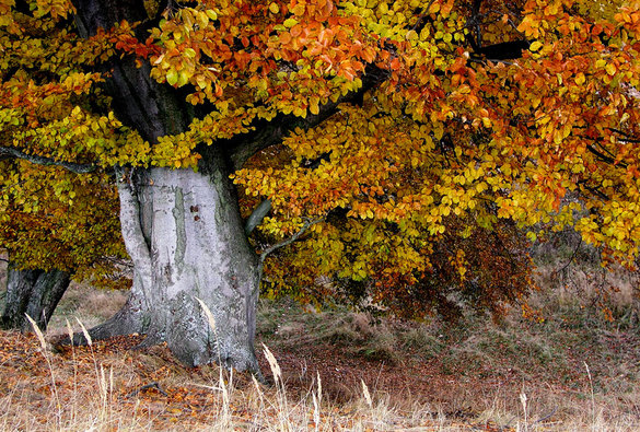 Vyhodnocení podzimního kola fotosoutěže Les očima lesníka