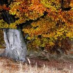 barvy-podzimu-dostal