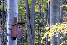 Lesy ČR chrání biodiverzitu
