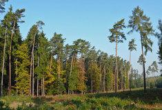 Co všechno umí les?