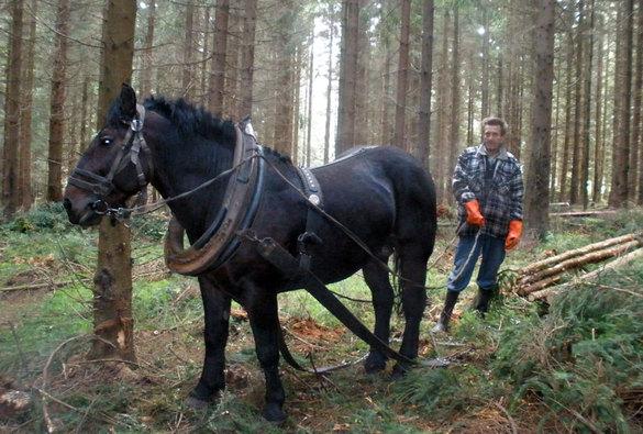 Práce vlese