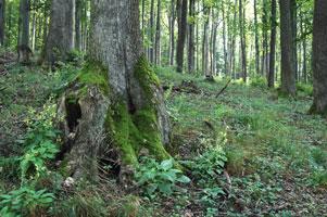 doupne-stromy2-301.jpg