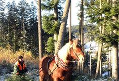 Ve státních lesích uRožnova se začalo těžit dříví pro Libušín
