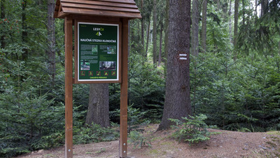 Klokočná – přírodě blízké pěstování lesa