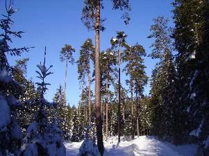 gz-borovice-lanska-800_301x225.jpg