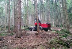 Lesy ČR začaly hodnotit nabídky podané vlesnických tendrech 2017+