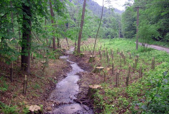 Historie služby lesnicko-technických meliorací ahrazení bystřin na jihovýchodní Moravě