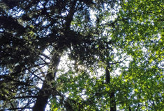 Lesy ČR odvedly v roce 2017 do státní pokladny 3,050 miliard korun
