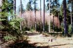 Popis současného stavu lesních porostů