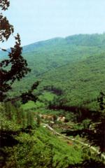 Vývoj lesního hospodářství