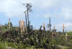 Kalamitní škody se stále odstraňují