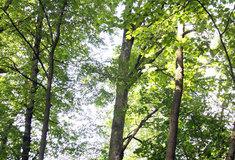 Letošní setkání lesníků se zástupci samospráv i s veřejností  začala na severu Čech