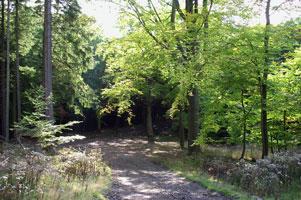 lesy-nejsou-motodraha-301.jpg