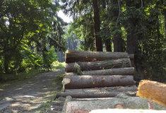 Rekordní příspěvek do státní pokladny: Lesy ČR letos odvedly více než 8,2 miliardy korun
