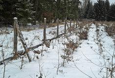 Ochrana mladých lesních porostů na Lesní správě Třebíč voblasti svysokými stavy černé zvěře