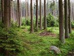 Pěstování lesů