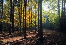Církevní restituce: Lesy ČR zatím vydaly 102 tisíc hektarů a306 staveb