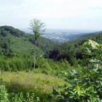 pohled-na-lesni-porosty-z-p