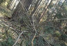 Páteční silný vítr zásadní škody ve státních lesích nezpůsobil