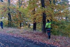 Lesy ČR daly od dubna do října práci 290 nezaměstnaným