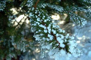 stromky-12-301.jpg