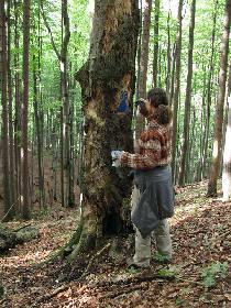stromy-jsou-oznaceny-modrym_210x280.jpg