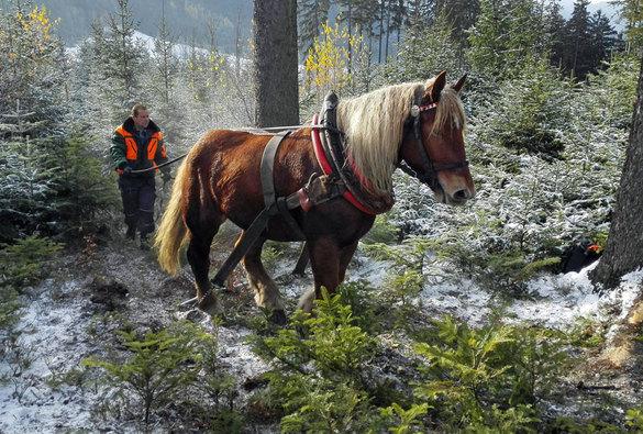 Těžba dřeva pro Libušín 2016
