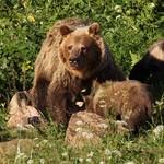 medvěd 5