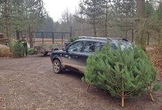 Lesníci zdarma rozvážejí do dětských domovů, nemocnic iazylových domů vánoční stromky dětem