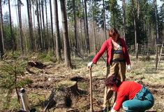 Lesy ČR vypsaly veřejnou zakázku na provádění lesnických činností