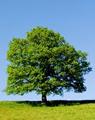 Významné stromy LČR