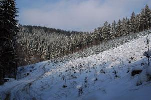 zimni-les-1-301.jpg