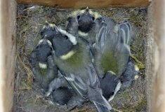 Lesníci vyvěšují budky, blíží se Den ptactva
