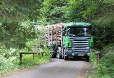 Kůrovcové dříví se musí z lesa včas odvézt, ato i po obecních cestách