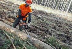 V lesích je nedostatek dělníků, Lesy ČR vyvolaly diskusi