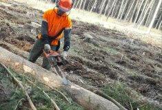 Lesnické tendry 2018+ vyhlásí podnik Lesy České republiky v červenci
