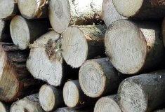 Společný obchod SVOL se dřevem vzrostl za deset let o 80 procent