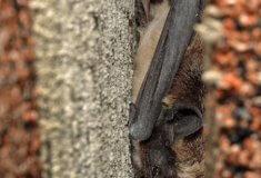 V neprozkoumaných Brdech se hledají vzácní netopýři