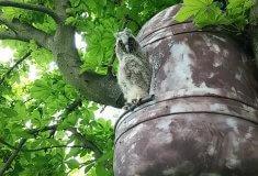 Domovy pro dravce a sovy na Břeclavsku