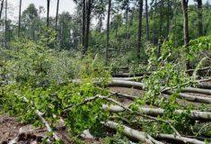 Více než sto tisíc metrů krychlových dříví poškodil silný vítr – první odhady škod ve státních lesích