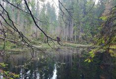 Část národní přírodní rezervace Boubín je od prosince opět přístupná veřejnosti