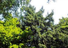 LESFEST opět v Bio Centrálu – filmy o lese apřírodě uvidíte 2. prosince