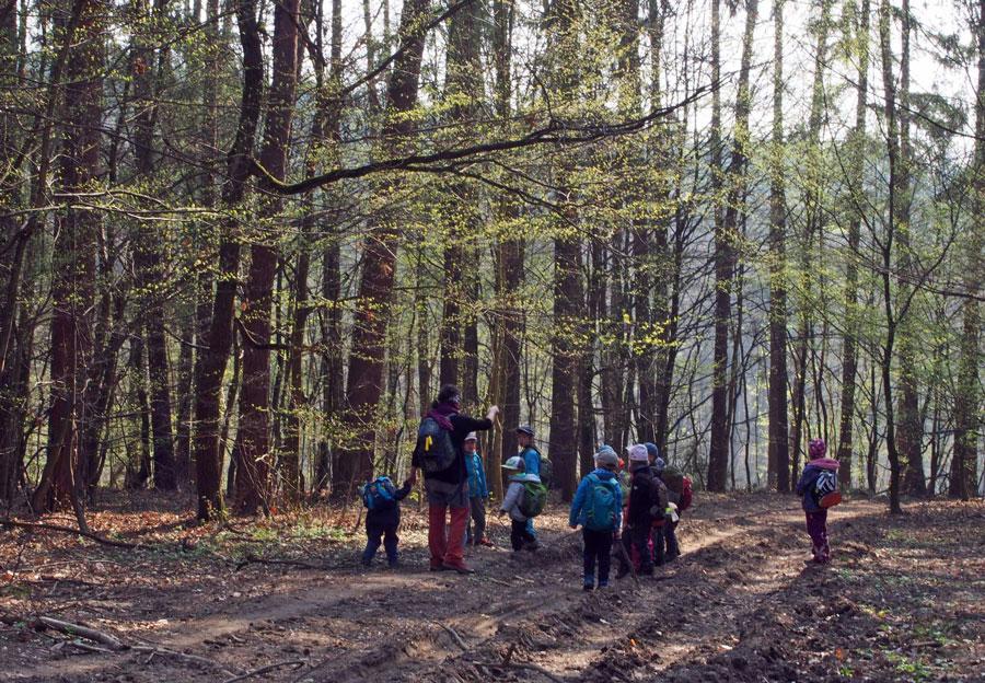 V Lesni Skolce Nevyrustaji Pouze Stromky Lesy Ceske Republiky S P
