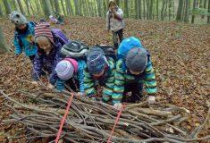 V lesní školce nevyrůstají pouze stromky