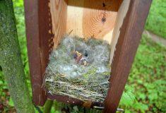 Jak správně vyvěsit ptačí budku pro sýkory adalší drobné pěvce?