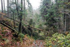 Vichřice Herwart poškodila ve státních lesích jeden a půl milionu m3 dříví