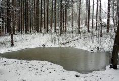 Obnova lesních tůněk